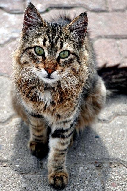 أجمل #القطط على #انستجرام - صورة ١٧