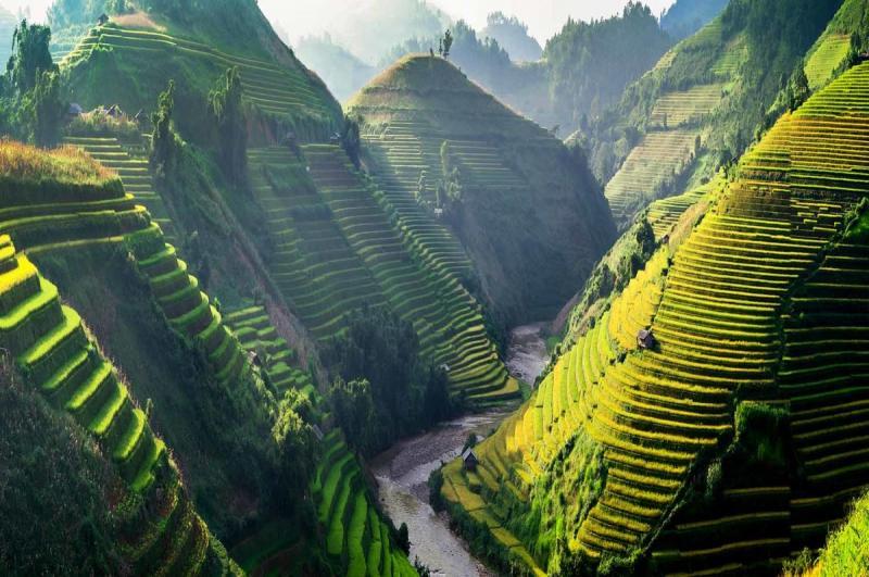 حقول الأرز في #فيتنام - صورة ١