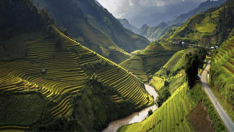 حقول الأرز في #فيتنام - صورة ٤