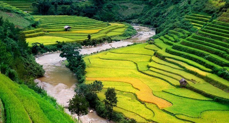 حقول الأرز في #فيتنام - صورة ٢