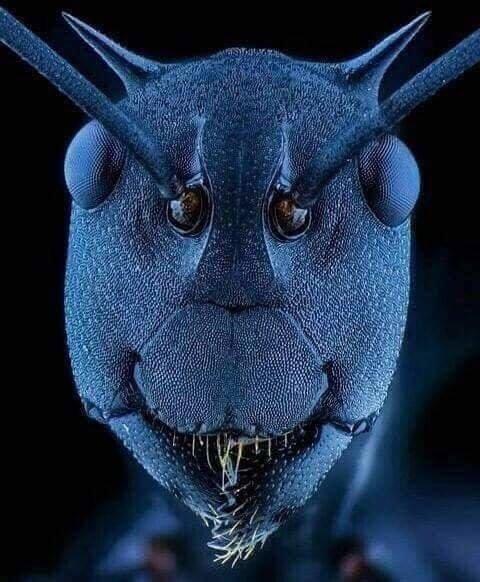وجه النملة عند تكبيره بالمجهر الإلكتروني