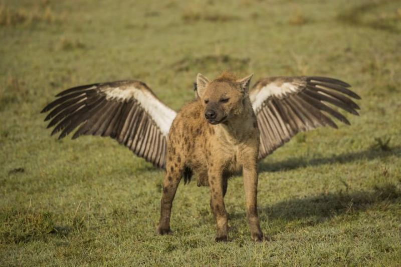 صور #حيوانات طريفة تصلح لعمل #خلفيات - صورة ٤