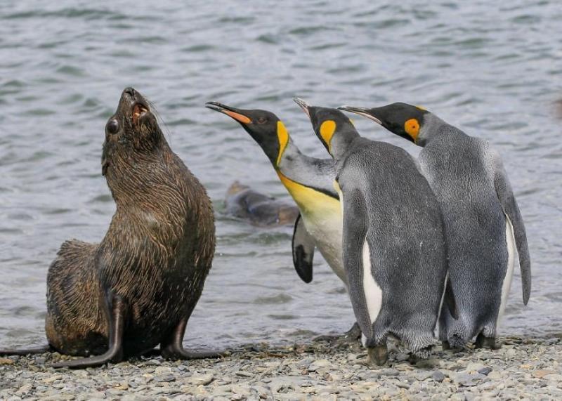 صور #حيوانات طريفة تصلح لعمل #خلفيات - صورة ٦