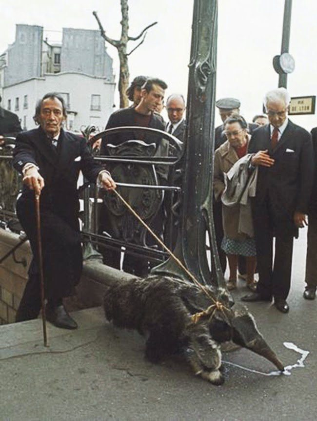 Salvador Dali walking his pet anteater in 1969 #History
