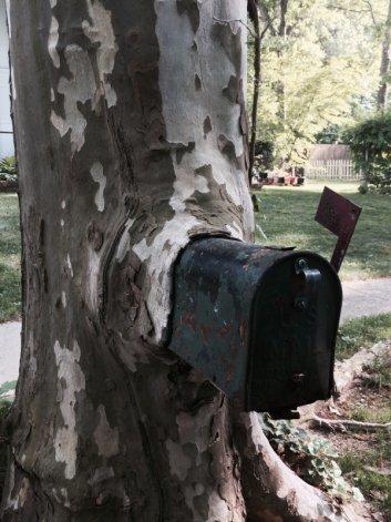 41 صورة تثبت قوة الطبيعة والأشجار - صورة 39