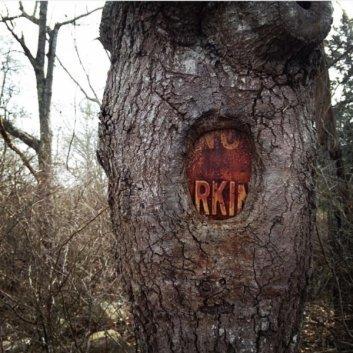 41 صورة تثبت قوة الطبيعة والأشجار - صورة 34