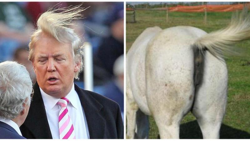 12 صورة مضحكة للشبه بين بعض #الحيوانات و #ترامب #مضحك #نهفات - صورة 5