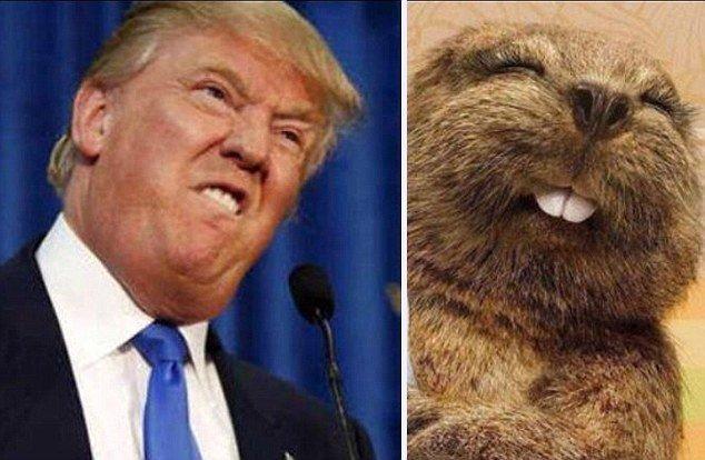 12 صورة مضحكة للشبه بين بعض #الحيوانات و #ترامب #مضحك #نهفات - صورة 12
