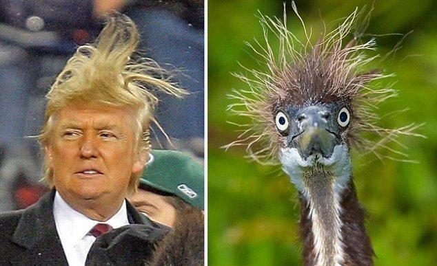 12 صورة مضحكة للشبه بين بعض #الحيوانات و #ترامب #مضحك #نهفات - صورة 11