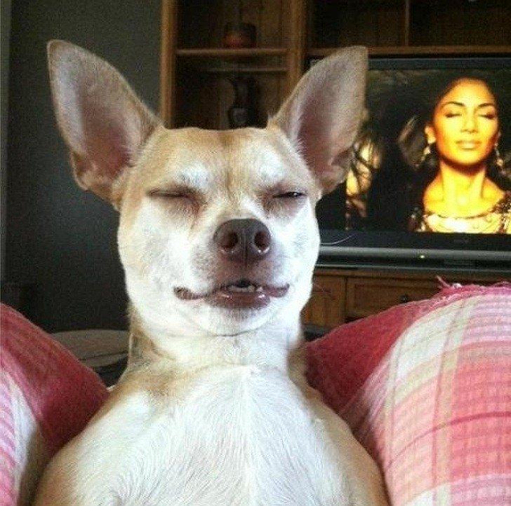 21 صورة ل #حيوانات في #الوقت_المناسب #مضحك #نهفات - صورة 17