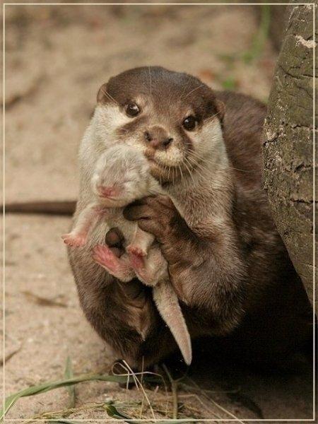 15 صورة لا بد أن تشاهدها ل #حيوانات #Animals - صورة 8