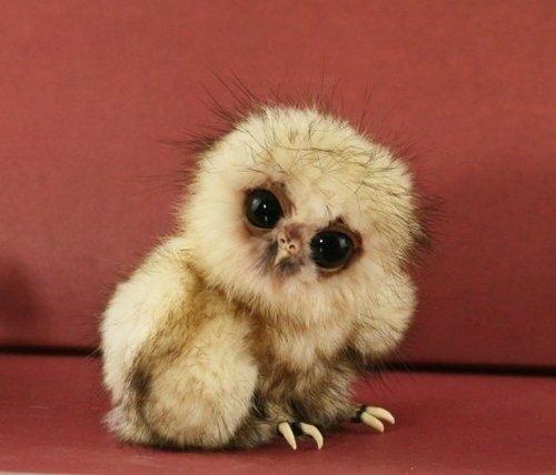 15 صورة لا بد أن تشاهدها ل #حيوانات #Animals - صورة 1