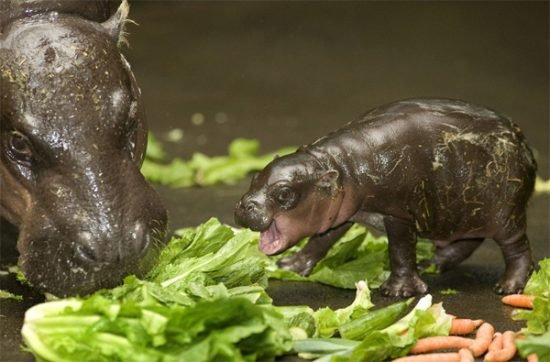 15 صورة لا بد أن تشاهدها ل #حيوانات #Animals - صورة 7