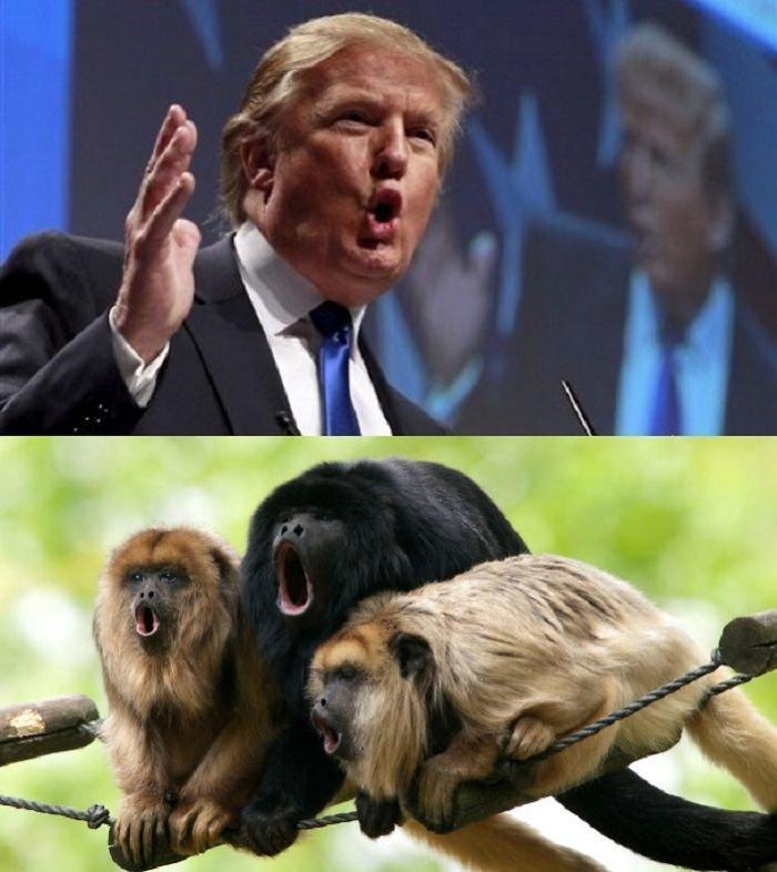 12 صورة مضحكة للشبه بين بعض #الحيوانات و #ترامب #مضحك #نهفات - صورة 10