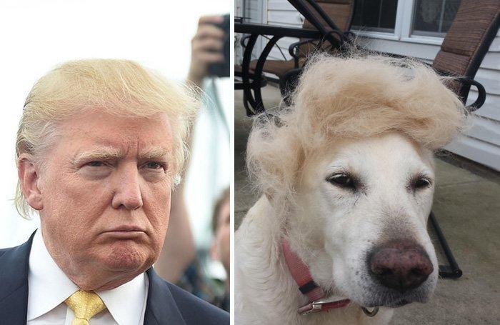 12 صورة مضحكة للشبه بين بعض #الحيوانات و #ترامب #مضحك #نهفات - صورة 6