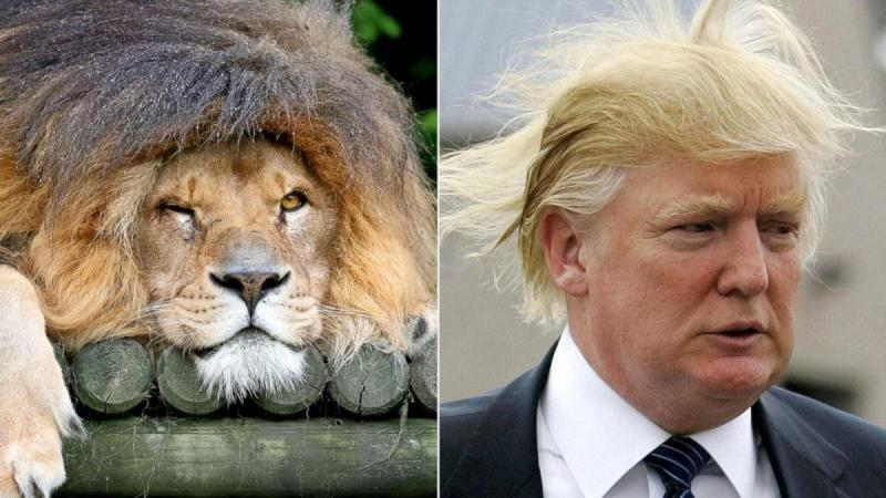 12 صورة مضحكة للشبه بين بعض #الحيوانات و #ترامب #مضحك #نهفات - صورة 4