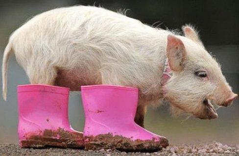 15 صورة لا بد أن تشاهدها ل #حيوانات #Animals - صورة 5