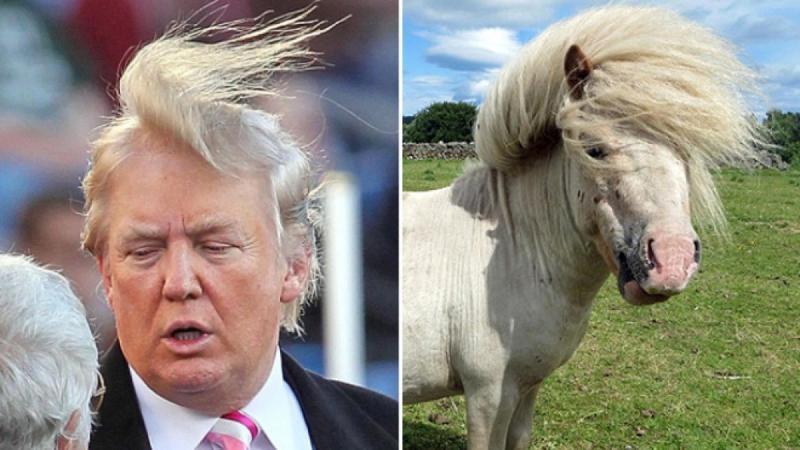 12 صورة مضحكة للشبه بين بعض #الحيوانات و #ترامب #مضحك #نهفات - صورة 3