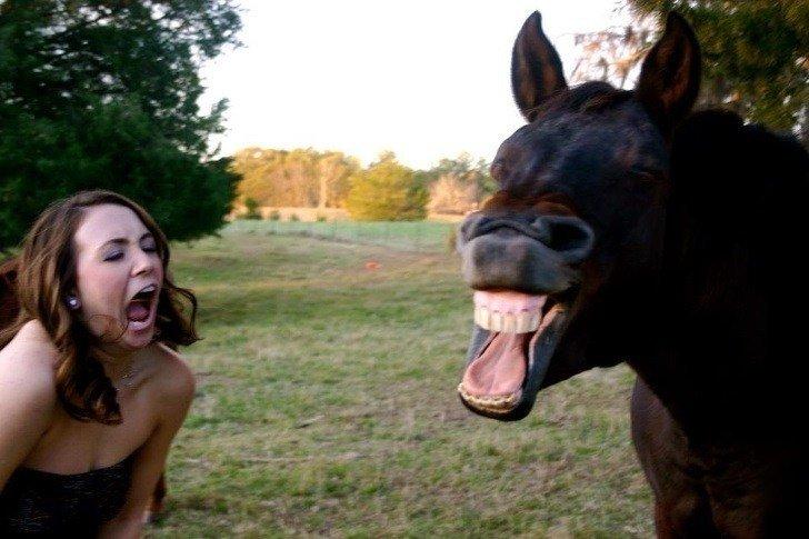 21 صورة ل #حيوانات في #الوقت_المناسب #مضحك #نهفات - صورة 20