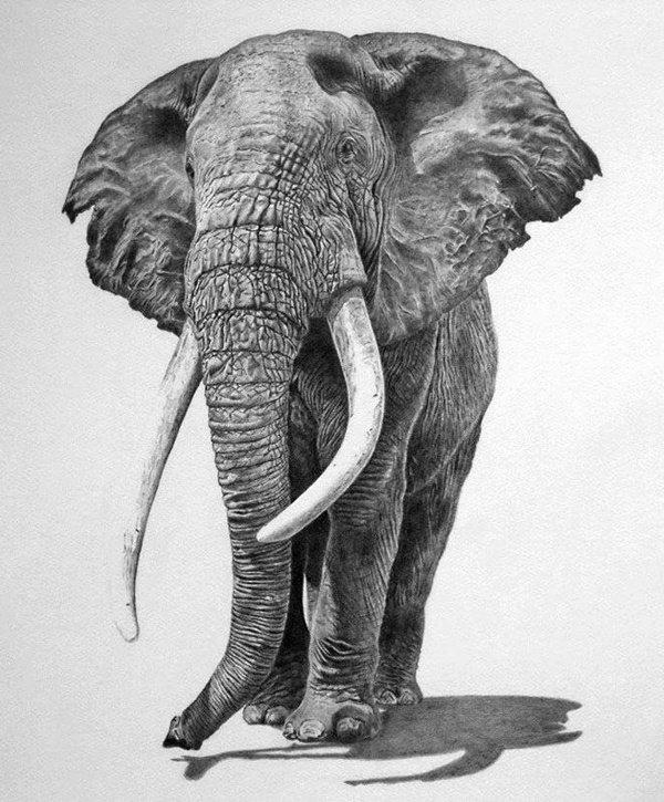 رسومات ثلاثية الأبعاد #3D باقلام الرصاص #Pencil_Sketch متقنة جدا #فن - صورة ٣