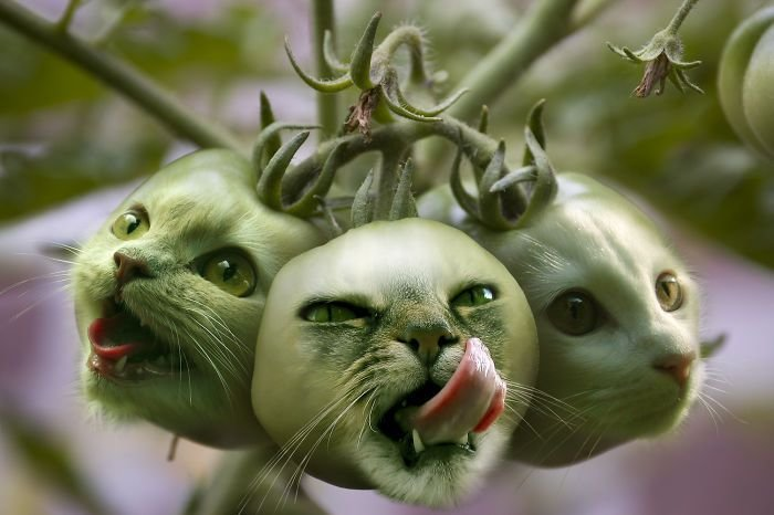 30 عمل باستخدام #الفوتوشوب لدمج صور #الحيوانات مع الخضار والفواكه #فن #مضحك - صورة 6