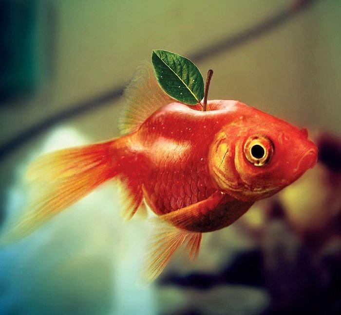 30 عمل باستخدام #الفوتوشوب لدمج صور #الحيوانات مع الخضار والفواكه #فن #مضحك - صورة 9
