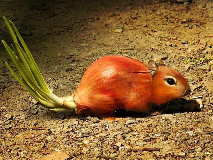 30 عمل باستخدام #الفوتوشوب لدمج صور #الحيوانات مع الخضار والفواكه #فن #مضحك - صورة 8