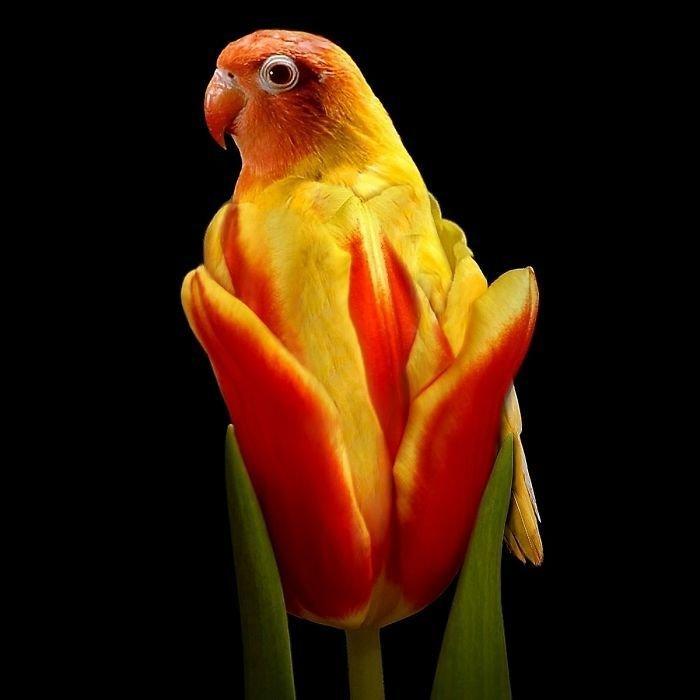 30 عمل باستخدام #الفوتوشوب لدمج صور #الحيوانات مع الخضار والفواكه #فن #مضحك - صورة 19
