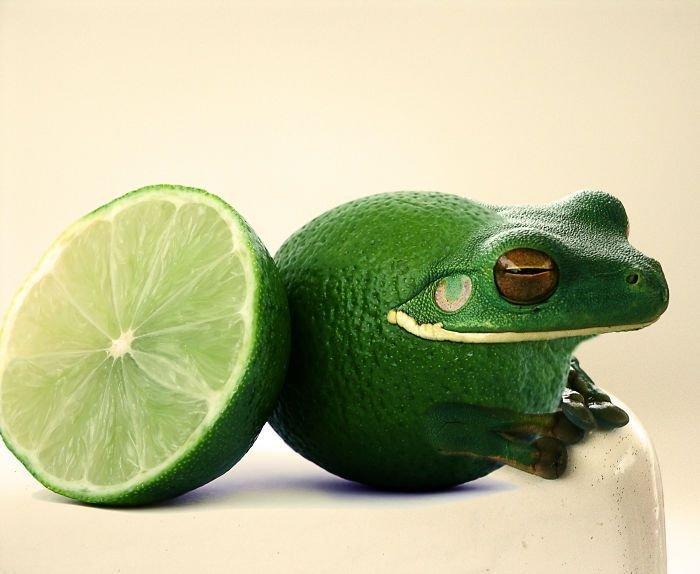 30 عمل باستخدام #الفوتوشوب لدمج صور #الحيوانات مع الخضار والفواكه #فن #مضحك - صورة 3