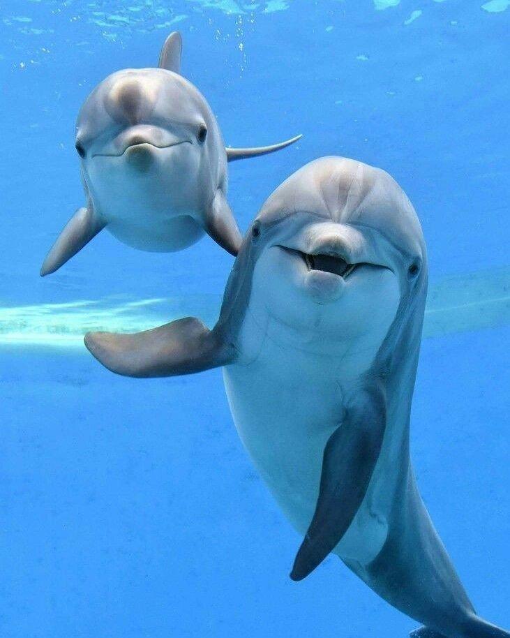 30 صورة تظهر غرائب العالم - أمهات الدلافين تغني لها حتى تنام