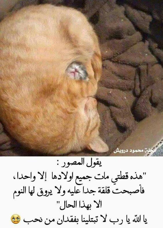 قطة فقدت جميع أطفالها إلا واحد فتنام يوميا هكذا #الأم #حيوانات
