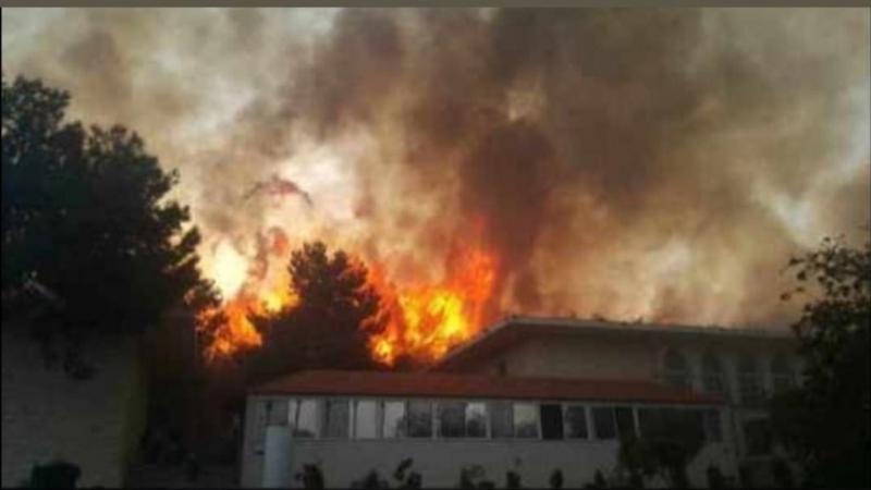 #حرائق في غابات #لبنان #لبنان_يحترق - صورة 6