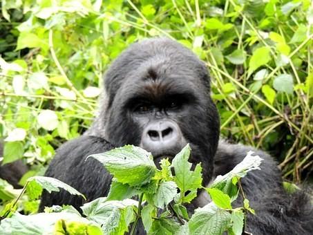 Photos from #rwanda #Travel - Image 22