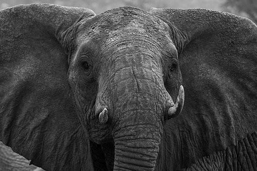 Photos from #Kenya #Travel - Image 17