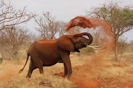 Photos from #Kenya #Travel - Image 95