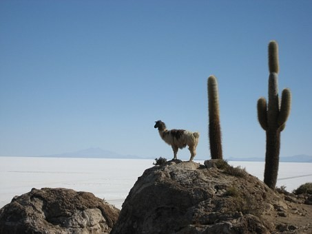 Photos from #Bolivia #Travel - Image 104