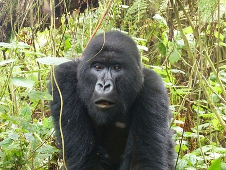 Photos from #rwanda #Travel - Image 17