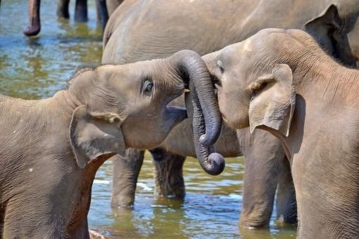 Photos from #SriLanka #Travel - Image 104