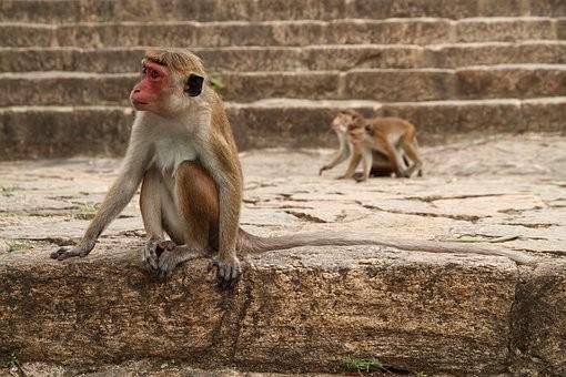Photos from #SriLanka #Travel - Image 74