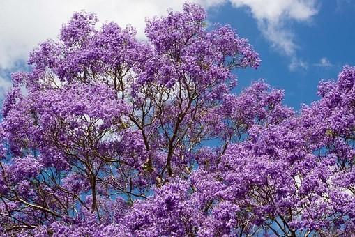 Photos from #Australia #Travel - Image 100