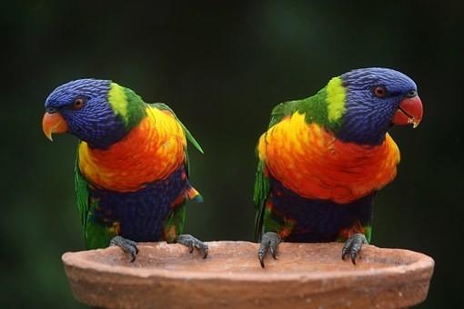Photos from #Australia #Travel - Image 142
