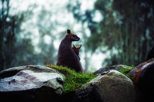 Photos from #Australia #Travel - Image 250