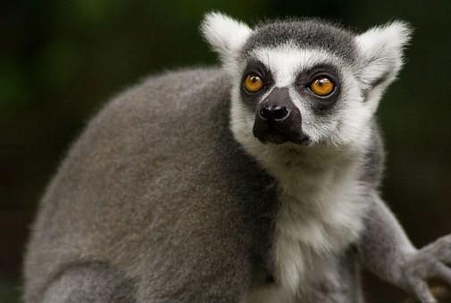 Photos from #Madagascar #Travel - Image 52