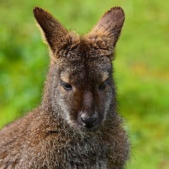 Photos from #Australia #Travel - Image 68