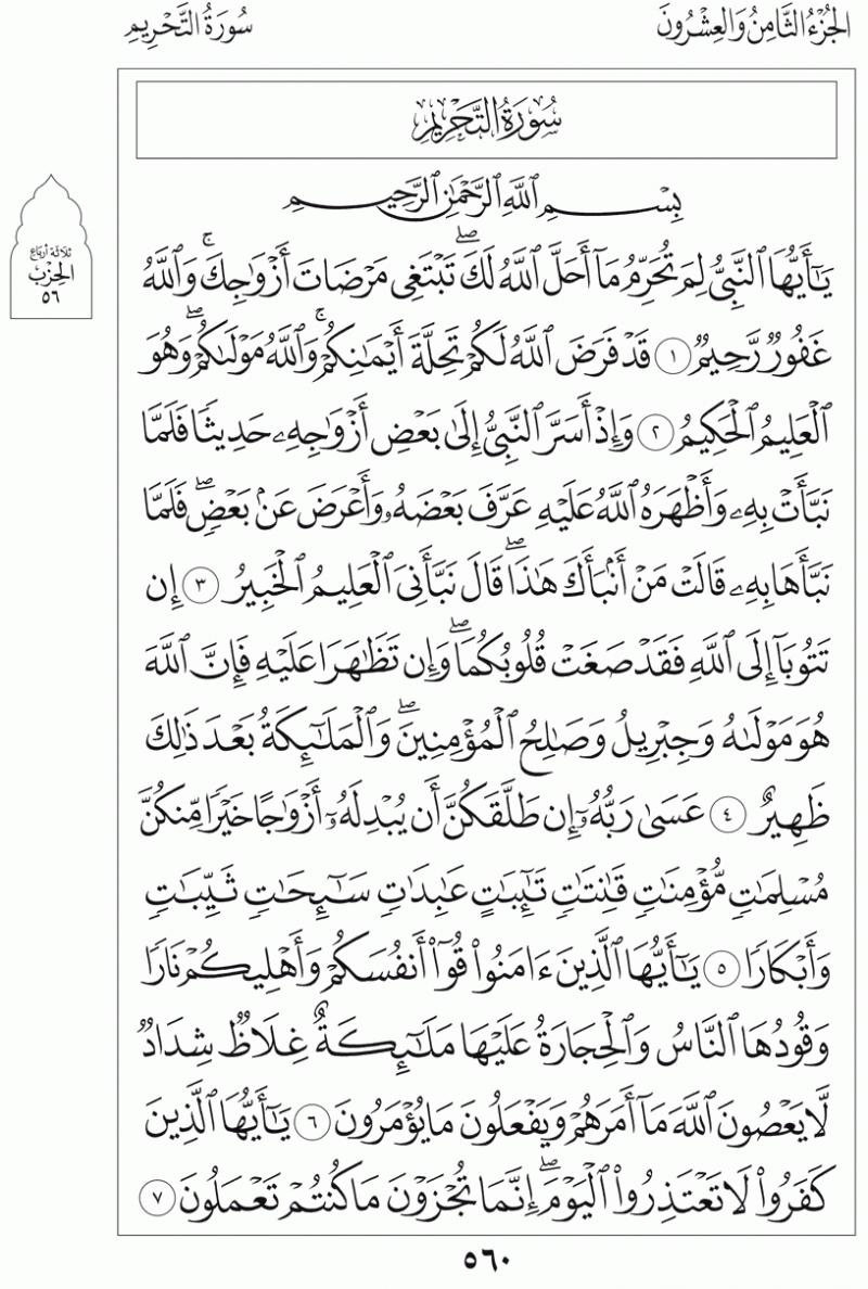 #القرآن_الكريم بالصور و ترتيب الصفحات - #سورة_التحريم صفحة رقم 560