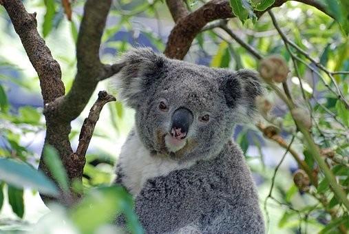 Photos from #Australia #Travel - Image 127