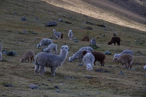 Photos from #Peru #Travel - Image 3