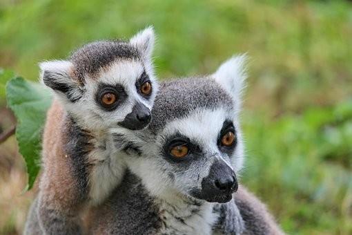 Photos from #Madagascar #Travel - Image 80