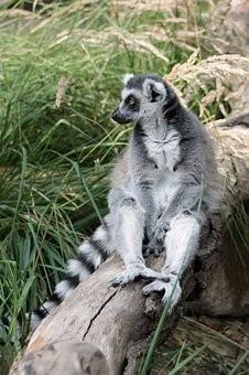 Photos from #Madagascar #Travel - Image 64