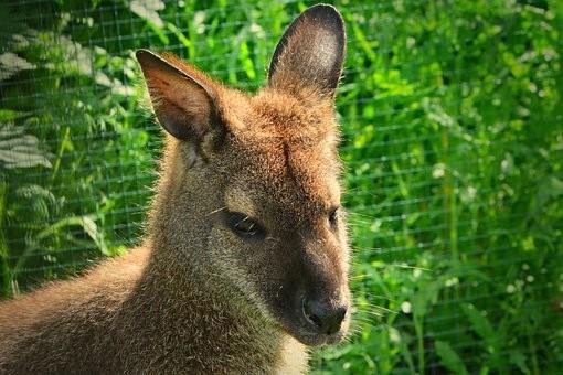 Photos from #Australia #Travel - Image 21